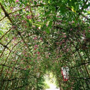 「向島百花園」に行きました。その1