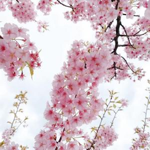 桜色が私たちに与えてくれるもの