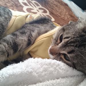 保護猫ミントちゃんの避妊手術と術後服