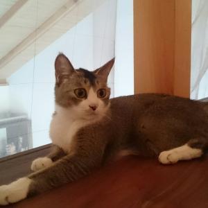 保護猫リュリュちゃん今日手術です。応援お願いいたします