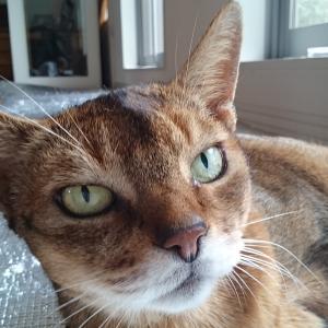 起きてる時の猫様の呼吸数は1分20~34回♪