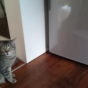 猫のオモチャがたまる場所★