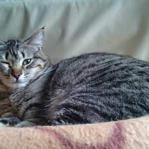 保護猫ミントちゃん、オメメが痛い痛い(T-T)