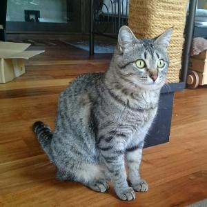 保護猫ミントちゃん、目薬続投中