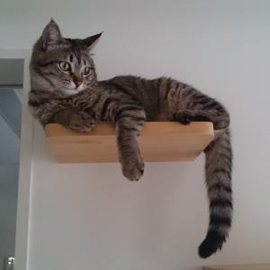 猫に点眼する方法