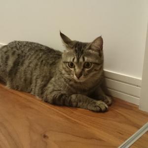 脱走の常習犯猫への対策6つ