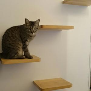 高齢猫には真っ直ぐ並んだキャットステップがベター
