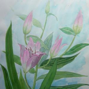 水彩「ピンクのゆり」