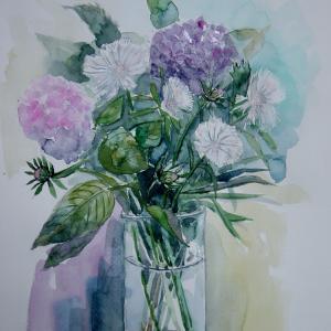 水彩「白いストケシアの花」-