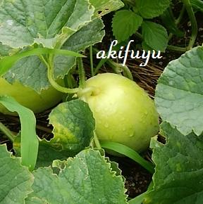 楽しみ~(*^_^*)