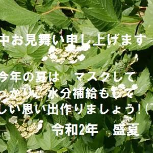 暑中お見舞い申し上げます(*^_^*)