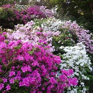 いろいろな花が咲いていますね(^^♪