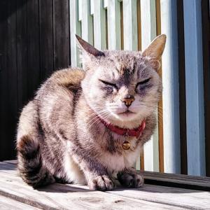 猫たちと春を待つ暮し