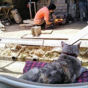 窯たき監督猫のルーツ