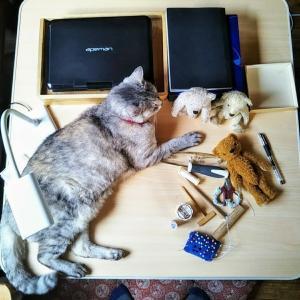 窯たき終了と猫の言い分
