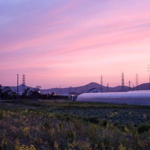 キャベツ畑の夕景