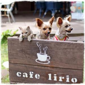 カフェ リリオ