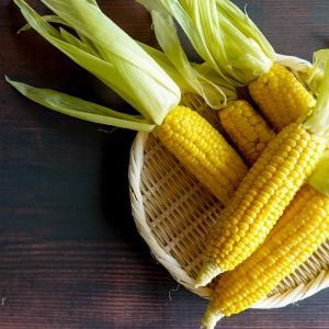 発地市庭で人気のトウモロコシ「味来」を!