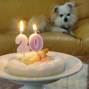 愛犬は20歳になりました♪