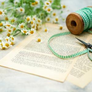 マトリカリアの花言葉は「集う喜び」