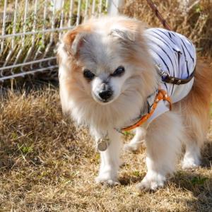 愛犬が長生きしている、その秘訣は?