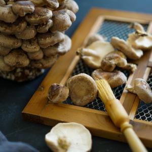 自宅で椎茸栽培