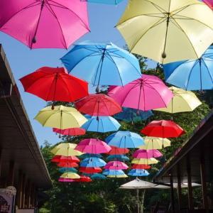 梅雨時の風物詩 ハルニレテラスのアンブレラスカイ