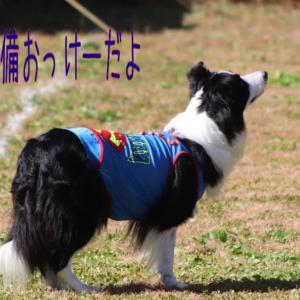 魅せられる~わん・つー・WAN-WA杯~