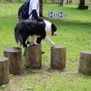 Woofでそこは飛びたい