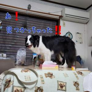 Dog gets on the table.