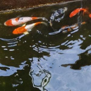 池の水換え❗️