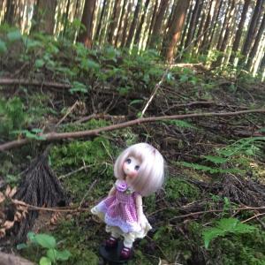 チュマちゃんと行く森の中