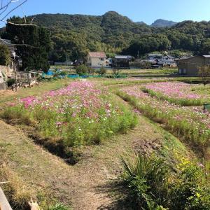 本日の豆P(小豆島SAKATEプロジェクト)