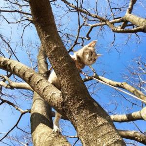 木登りレジェンドはなちゃん