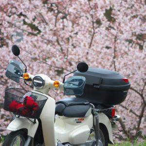 カブで桜探訪 ちょこっとクロスランナーも