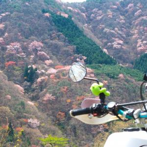 桜と山頂求めてプチ林道ツーリング