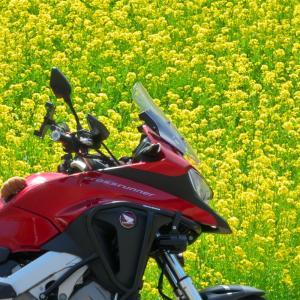 2週連続花探訪プチツー 黄色い春?