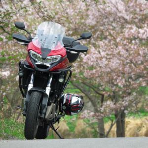 桜が散りきる前に滑り込みプチツー