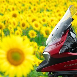 花散歩 紫陽花と向日葵
