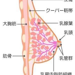 男性トレーナ―から教わる@たれ乳予防法
