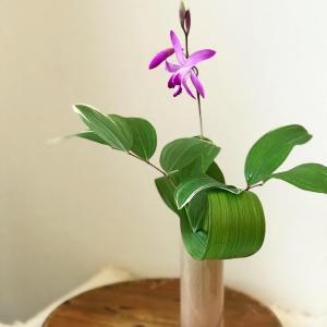 シンプルに紫蘭