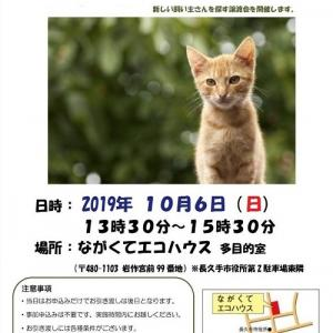 明日は 長久手市 譲渡会!!  参加猫は!!!