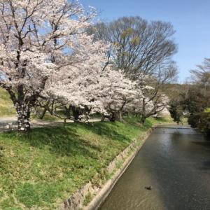 桜満開水辺の石窯キッチンへ〜♪