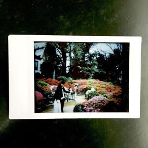 【チェキフィルムプリンター プリントス】FUJIPET 35で撮った「第50回文京つつじまつり」の写真をプリントしてみた【チェキフィルム】