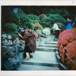 【チェキフィルムプリンター プリントス】2019年4月上旬に開催された「第50回文京つつじまつり」の写真をプリント【チェキフィルム】