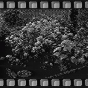 【ゲームボーイ ポケットカメラ】2020年6月の紫陽花が咲く六辻水辺公園【デジタルカメラ】