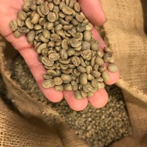 新入荷コーヒー豆は グァテマラ ブルーラグーン