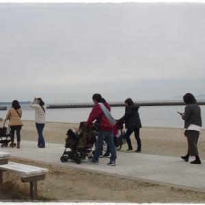 1月12日 日間賀島散歩 海岸沿いで記念撮影