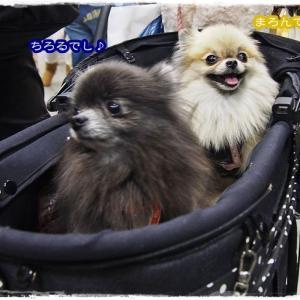 【振返り】ペット博2015 in横浜 で会いたかった有名犬に