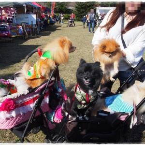 【振返り】Asagiri Field Dogs Gardenのフリマへ